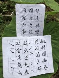 baobaozheng