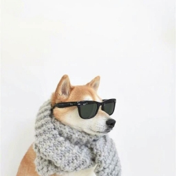 carrydog